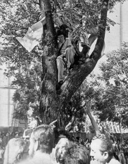 Dayrell-na-árvore